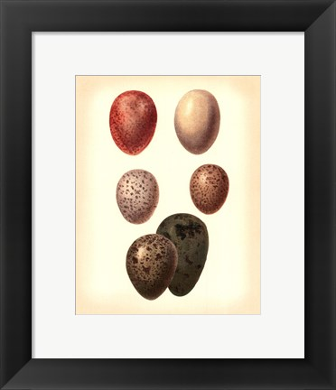 Framed Bird Egg Study VI Print