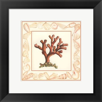 Framed Coral with Shell Border I Print