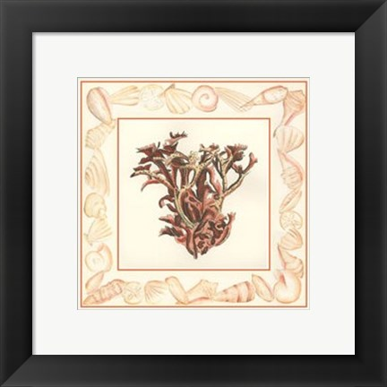Framed Coral with Shell Border III Print
