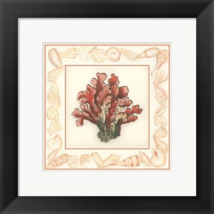 Framed Coral with Shell Border IV Print