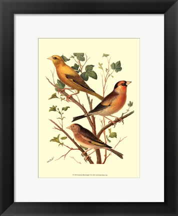 Framed Domestic Bird Family VI Print