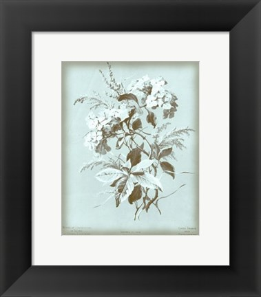 Framed Hydrangea on Blue Print