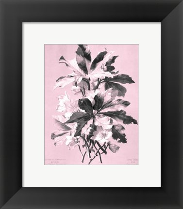 Framed Ellebore on Pink Print