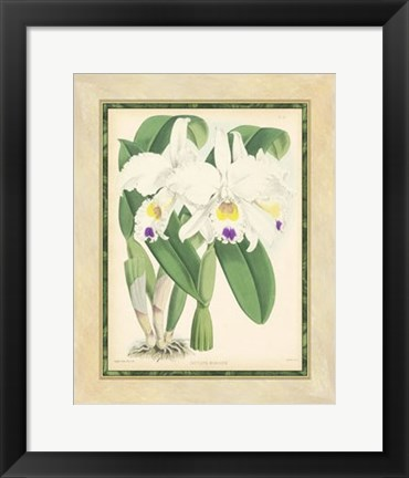 Framed Orchid III Print