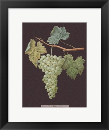 Framed White Grapes Print