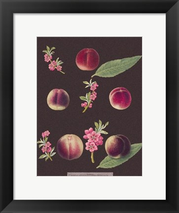 Framed Peaches Print