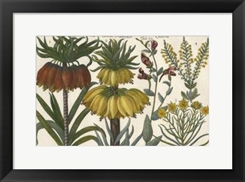 Framed Botanical I Print