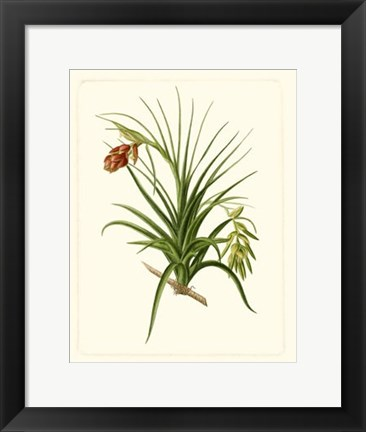 Framed Exotic Flora III Print