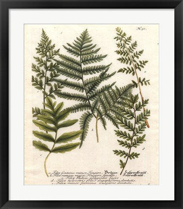 Framed Fern Gathering II Print