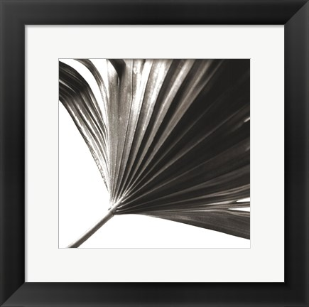 Framed Black and White Palm II Print
