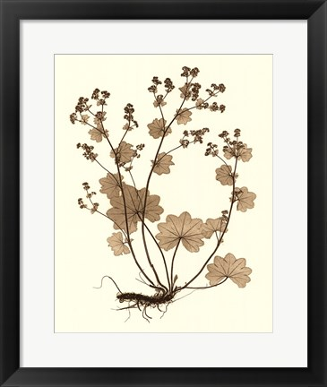 Framed Sepia Nature Study I Print