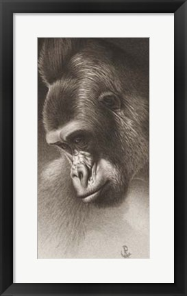 Framed Silver Back, The Gorilla Print