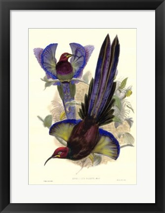 Framed Bird of Paradise III Print