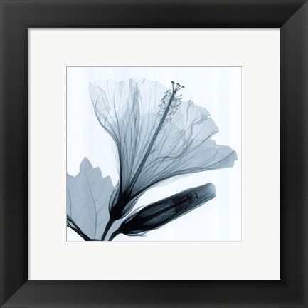Framed Hibiscus and Bud Print