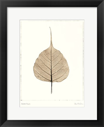 Framed India Ficus Print