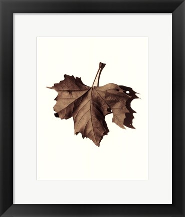 Framed Norway Maple Print