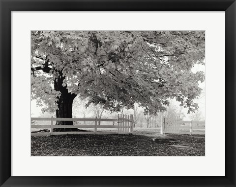 Framed Autumn Morning Print
