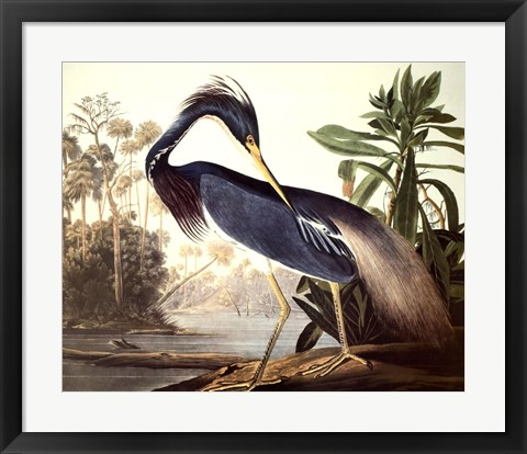 Framed Louisiana Heron Print