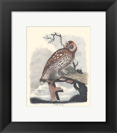 Framed Owl in the Snow Print