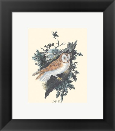 Framed Owl in the Woods Print