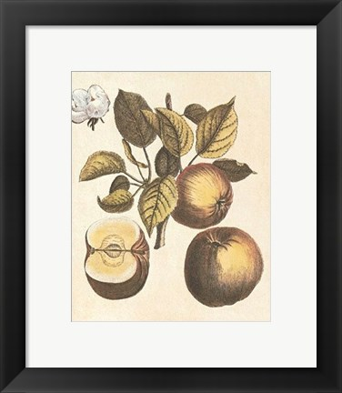 Framed French Fruit Plate/Apple Print