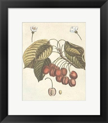 Framed French Fruit Plate/Cherries Print