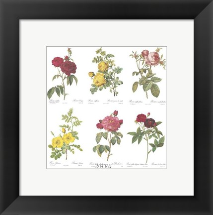 Framed Roses (Set of Six) Print