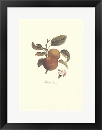 Framed Apple/Pomme Princesse Print