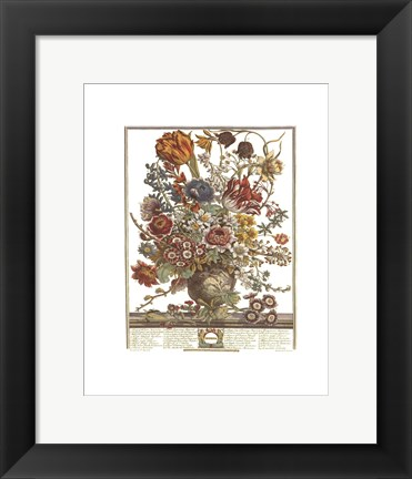 Framed March/Twelve Months of Flowers, 1730 Print