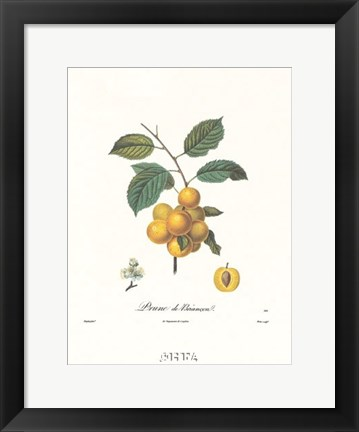 Framed Plums/Prune de Briancon Print