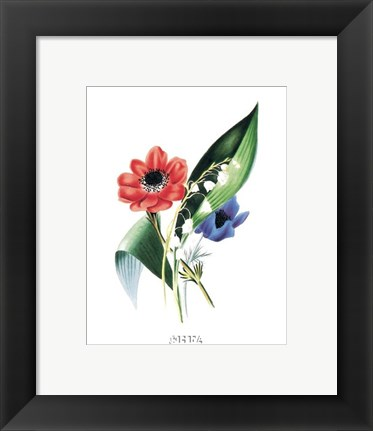 Framed Flowers (Untitled) Anemone Print