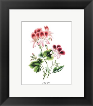 Framed Flowers (Untitled) - Pansy Print