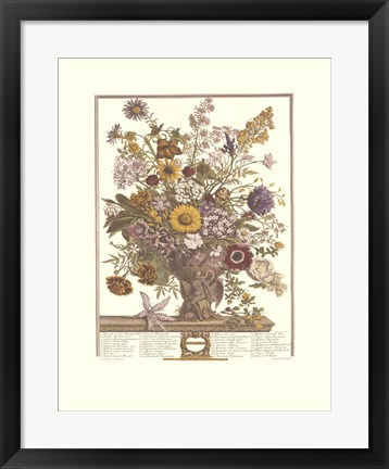 Framed November/Twelve Months of Flowers, 1730 Print