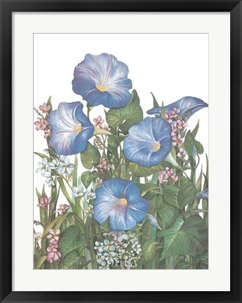 Framed Morning Glories Print