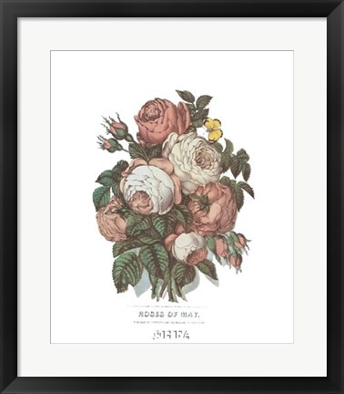 Framed Roses of May Print
