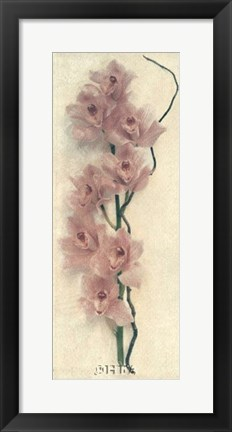 Framed Orchid with Branch Print