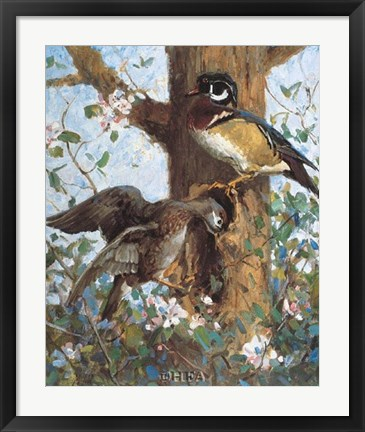 Framed Spring (Wood Ducks) Print
