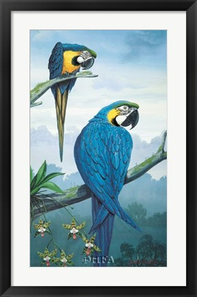 Framed Blue and Gold Macaw Print
