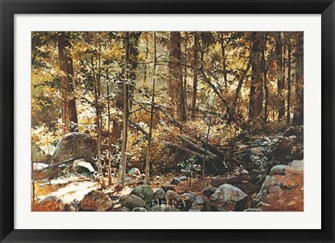 Framed Sunlit Forest (Yosemite) Print