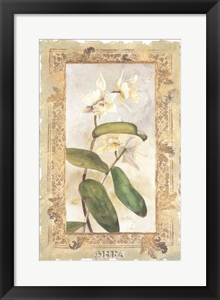 Framed Orchid Print