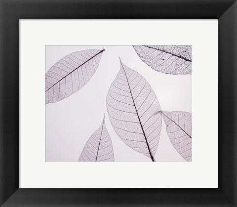 Framed Sheer Leaves I Print