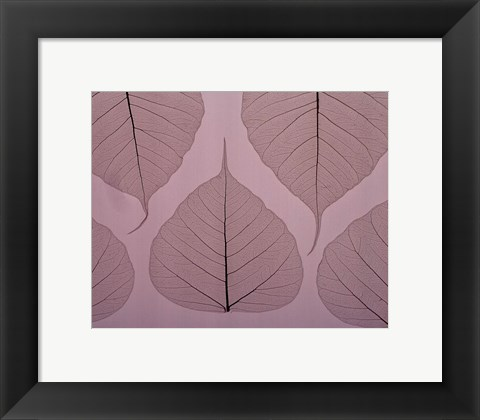 Framed Sheer Leaves II Print
