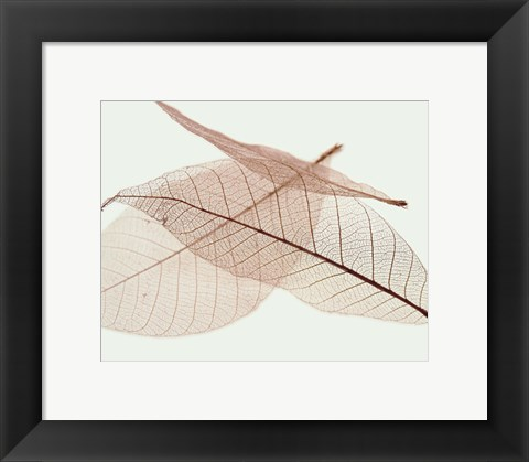 Framed Sheer Leaves IV Print