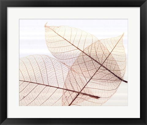 Framed Sheer Leaves III Print