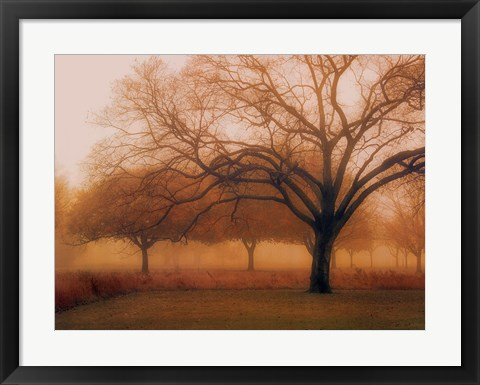 Framed Memory of Trees Print