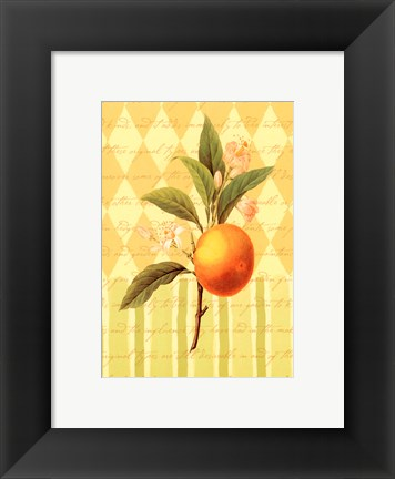 Framed Botanical Orange Print