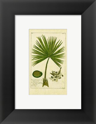 Framed Palm Leaves II Print