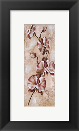 Framed Tropical Orchid II Print