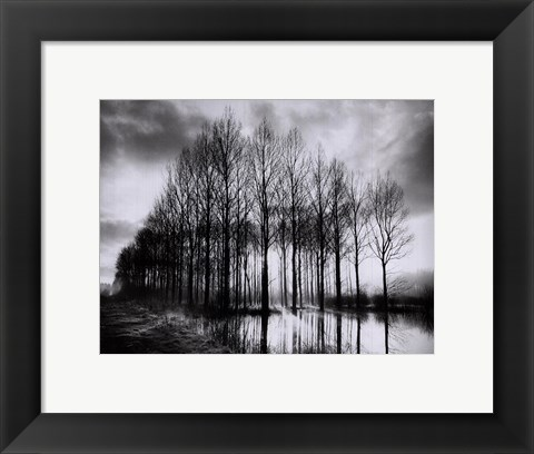 Framed Trees in Normandy Print