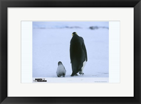 Framed March of the Penguins Mother and Baby Penguins Print